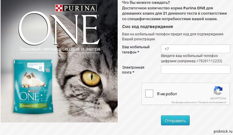 purina_theinsiders