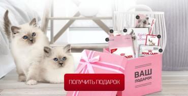 Вискас подарок для котёнка бесплатно